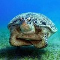 Turtle is not angry