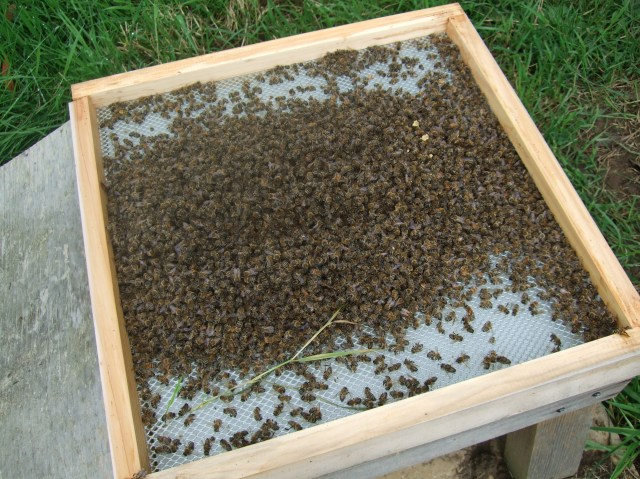 Dying & Dead Bees