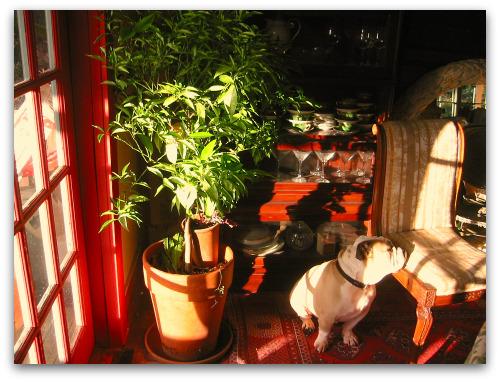blog_Mandarin_orange_tree