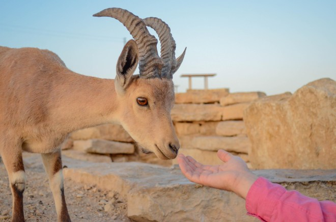 """Hiking the land sometimes affords you a real """"up close and personal"""" meeting with wildlife."""