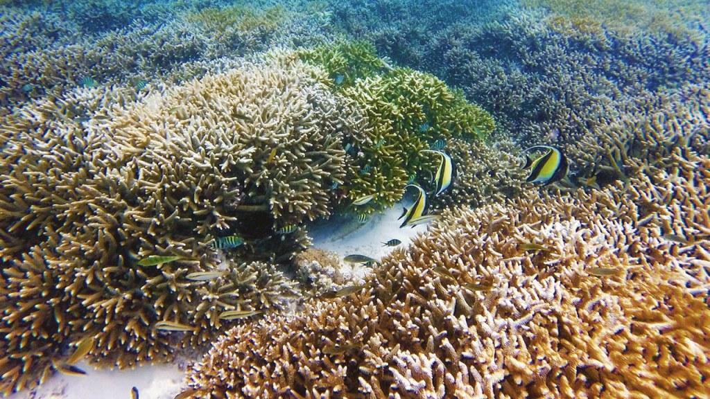 The beautiful marine life off the coast