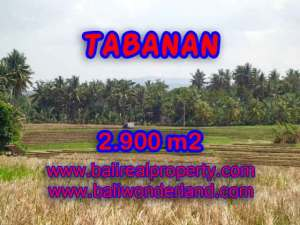 TANAH DIJUAL DI TABANAN MURAH TJTB136 - PELUANG INVESTASI PROPERTY DI BALI