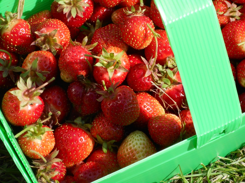 pick your own strwberries in a punnet