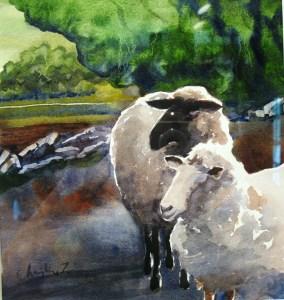 0705 John's sheep