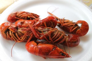 Steve doesn't normally like crawfish, but he enjoyed these.