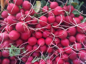 Wall of radishes. Try them roasted. JBG.