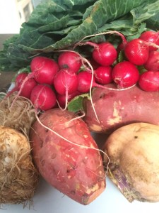 My haul from JBG: Collard Greens, Radishes, Sweet Potatoes, Rutabaga, Celery Root