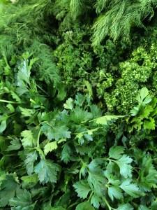 Herbs. JBG.
