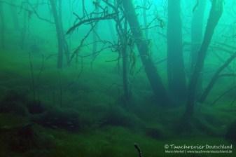Wald, Tauchen in Frose, Tauchen in Sachsen-Anhalt
