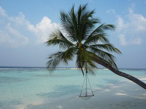 Vilamendhoo, Ari Atoll, Tauchen auf den Malediven