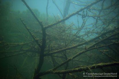 alter Baum im Wasser