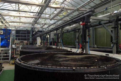 Fischbecken, TilapiaAquaponik, Leibnitz-Institut für Gewässerökologie und Binnenfischerei