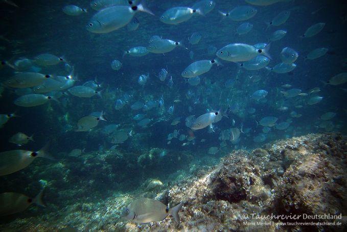 Mallorca, Cala Ratjada, Mero-Diving