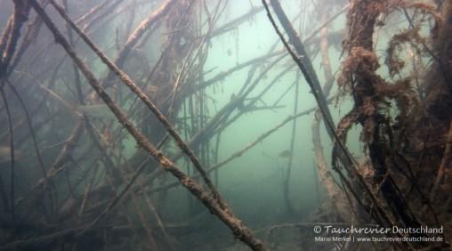 Unterwasserwald, Tauchen im Edderitzer See, Tauchen in Sachsen-Anhalt