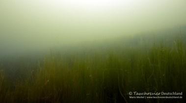 Seegraswiese, Tauchen im Edderitzer See, Tauchen in Sachsen-Anhalt