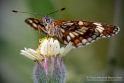 Schmetterling, Flora und Fauna in Mexico, Tauchen Cenoten