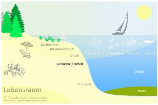 Natürliche Seen - Lebensraum