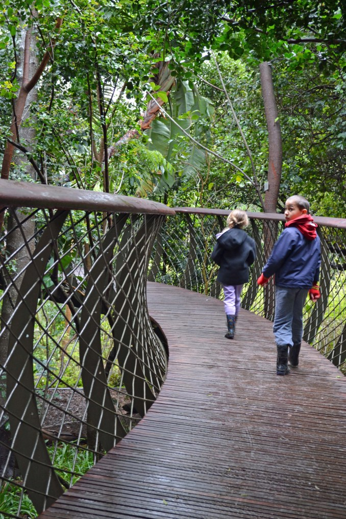 explore, cape town, local, must see, run of the mill, places to see, visit cape town, how to explore cape town like a local, discover, family, couples, backpacker, kirstenbosch botanical garden, cape point, hout bay, chapmans peak, drive, train, st james, kalk bay