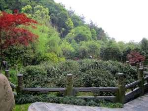 LongjingMaster (2)