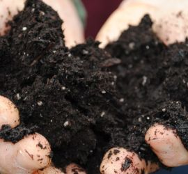Soil-Bacteria-Offer-Clues-to-Curbing-Antibiotic-Resistance