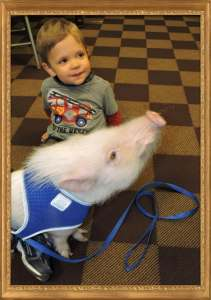 Brothers at heart! Otis the pig at 4 yrs old