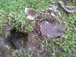 bees in the ground how to get rid of them