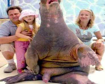 Bad Family Photos, Funny Family Photos, awkward, sea world, wtf, fail, omg, bad tattoos photos, family photos, weird