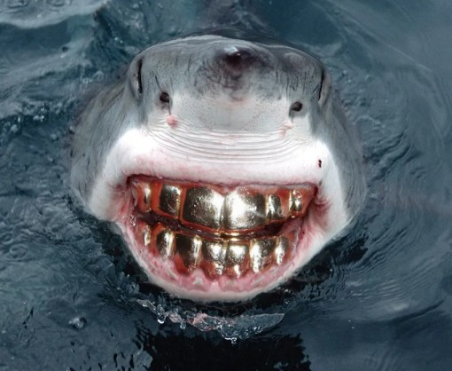 Random Pictures, Shark Smile With Teeth Grill, Great White Shark Smile, Funny smile, bad teeth