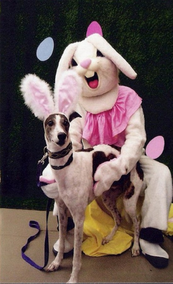 Scary Easter Bunny Pictures, Creepy Easter Bunny, Easter Bunnies, Funny Easter Bunny Pictures, Scary Easter Bunny Photos, Happy Easter, Bad Easter Bunny Pictures, Worst Easter Bunny PPictures, Funny Pictures, Demented Easter, Easter Fails, Aful Easter Pictures, Awkward Family Photos, Bad Family Photos, Worst Tattoos, Bad Tattoos, Funny Family, Kids with Easter Bunny, Scared Kids