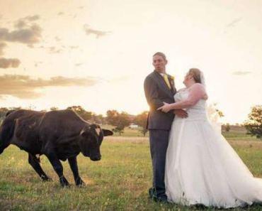 bull charging bride & groom ~ 15 Funny Wedding Pics