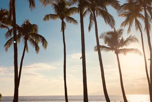 Palm Trees Maui