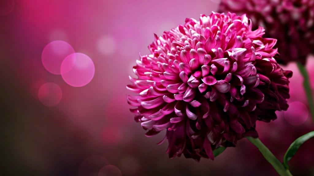 Beautiful red flower image hd wallpaper