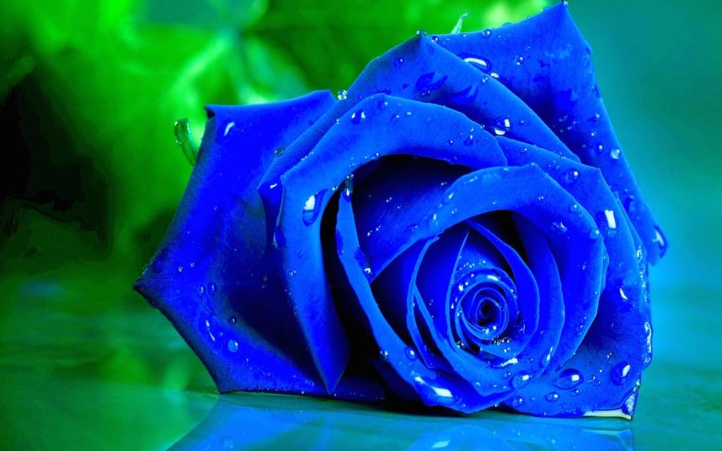 Blue Rose Wide Desktop Background