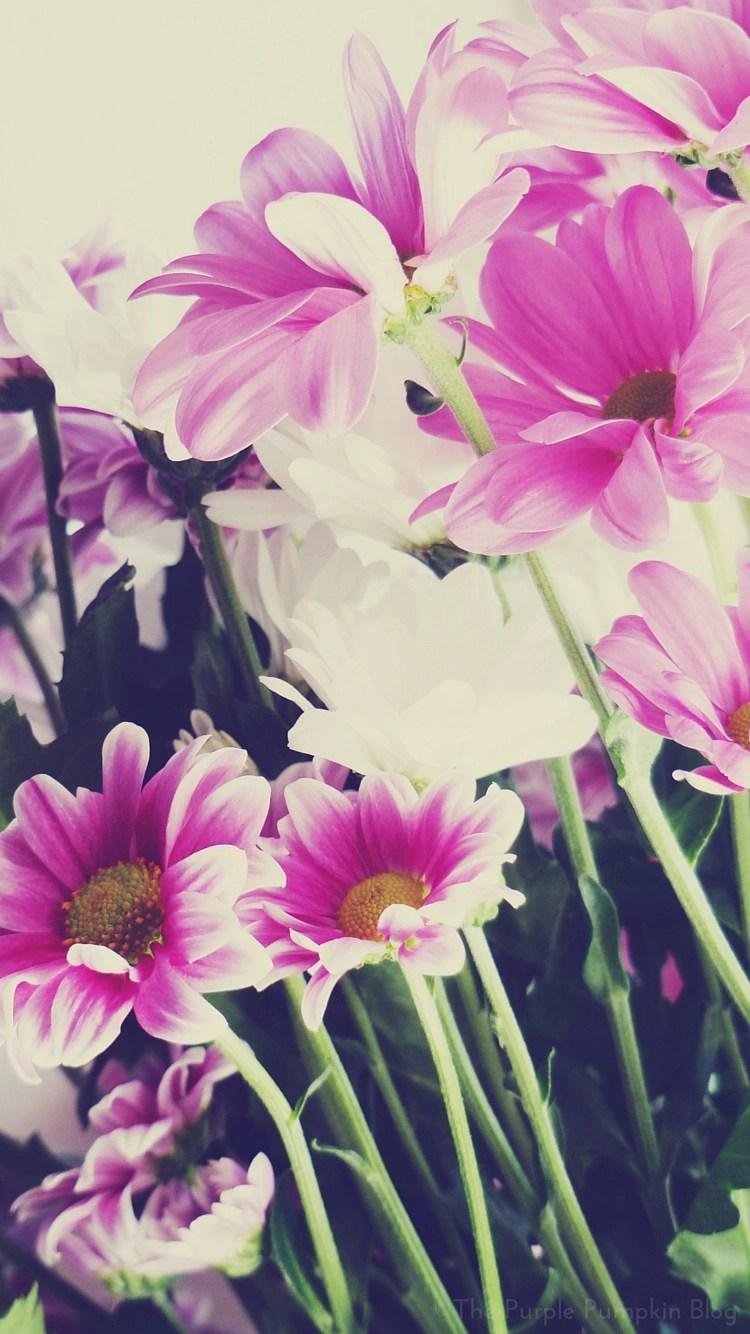 iPhone 7 flower garden wallpaper