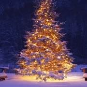 Merry Christmas hd Wallpapers, Images Free Download