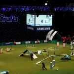 S+H Technical Crufts 2014 MA8893