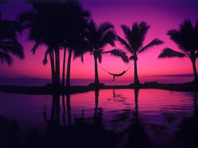 43 HD Purple Wallpaper/Background Images To Download For Free