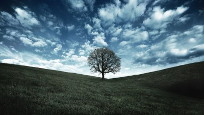 40 HD Tree Wallpapers/Backgrounds For Free Download