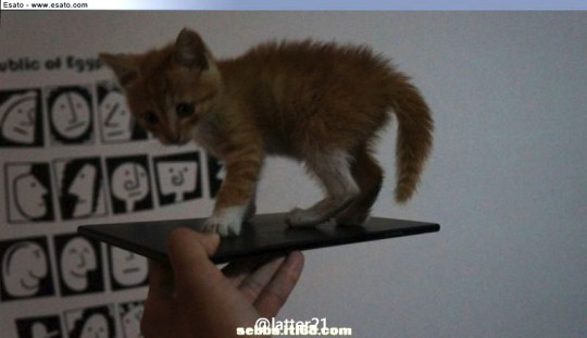 Upcoming Xperia ZU's Images Leak, Its So Big It Can Carry A Kitten