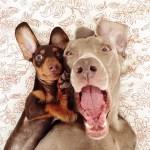 instagram-dogs.jpg