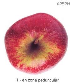Russeting peduncular en manzana