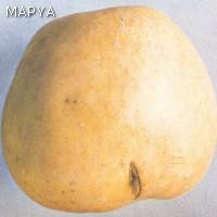 Frutos con grietas no cicatrizadas - Manzana