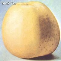 Manzana en perfecto estado