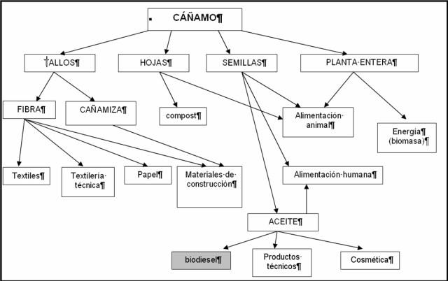 Usos de cannabis sativa