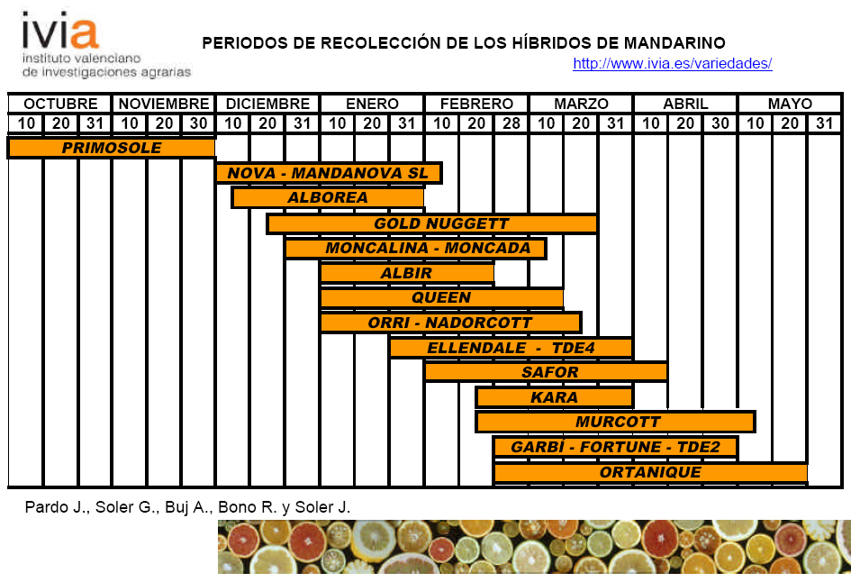 integrada citricos Calendario de recoleccion hibridos de mandarino