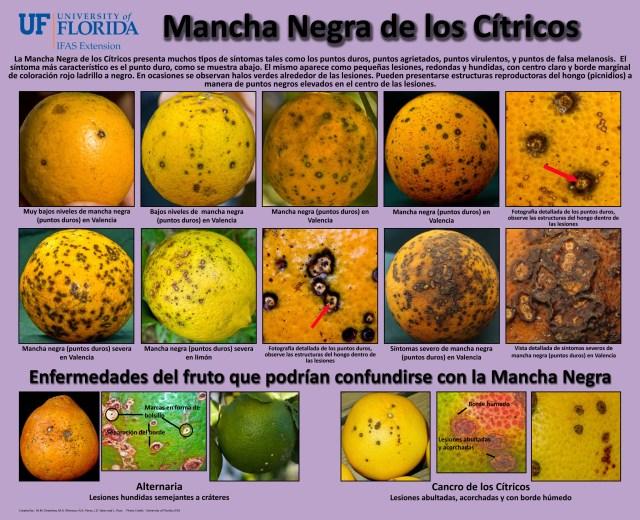 _Manchanegra