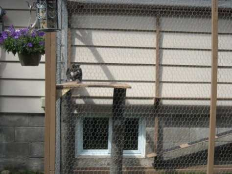 cat enclosure 002