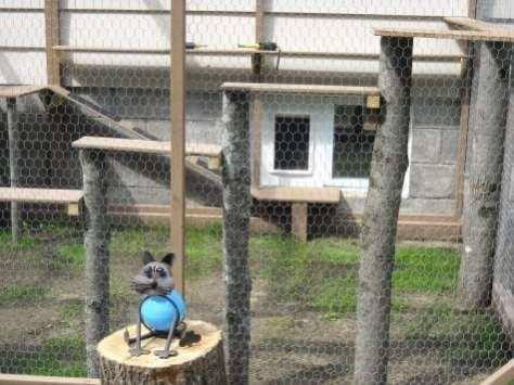 cat enclosure 004