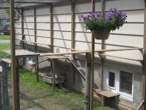 cat enclosure 006