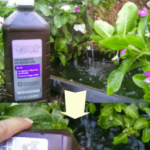 Banish algae in garden fountains with peroxide